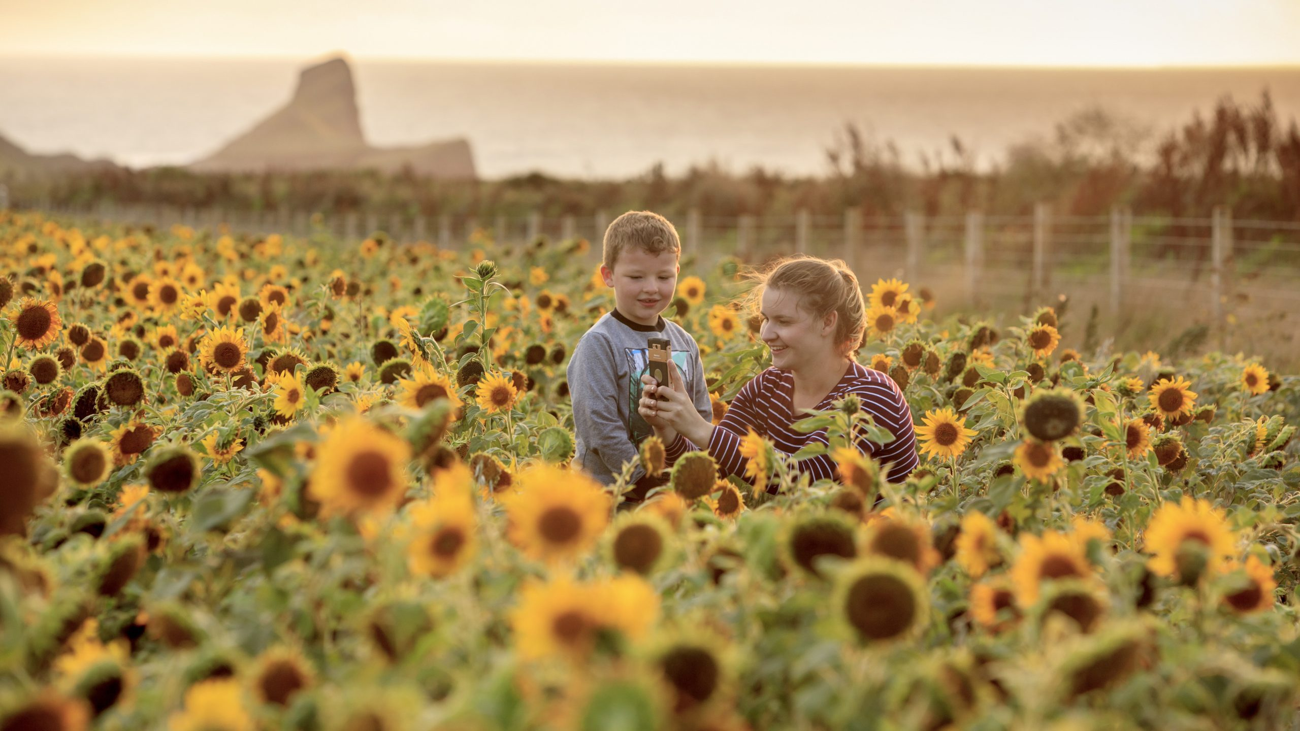 Visitors admiring the sunflowers at Rhossili and South Gower Coast, Wales