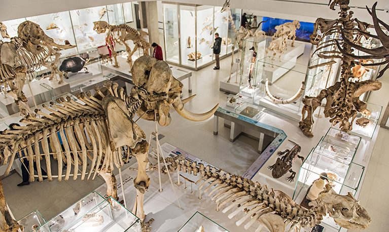 The Museum of Zoology. Photograph by Julieta Sarmiento Photography