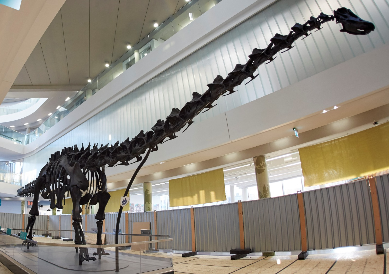 The Garfield Weston Foundation funded the Dippy on Tour project as the Natural History Museum's famous dinosaur went on tour around the country, most recently to Number One Riverside, in Rochdale