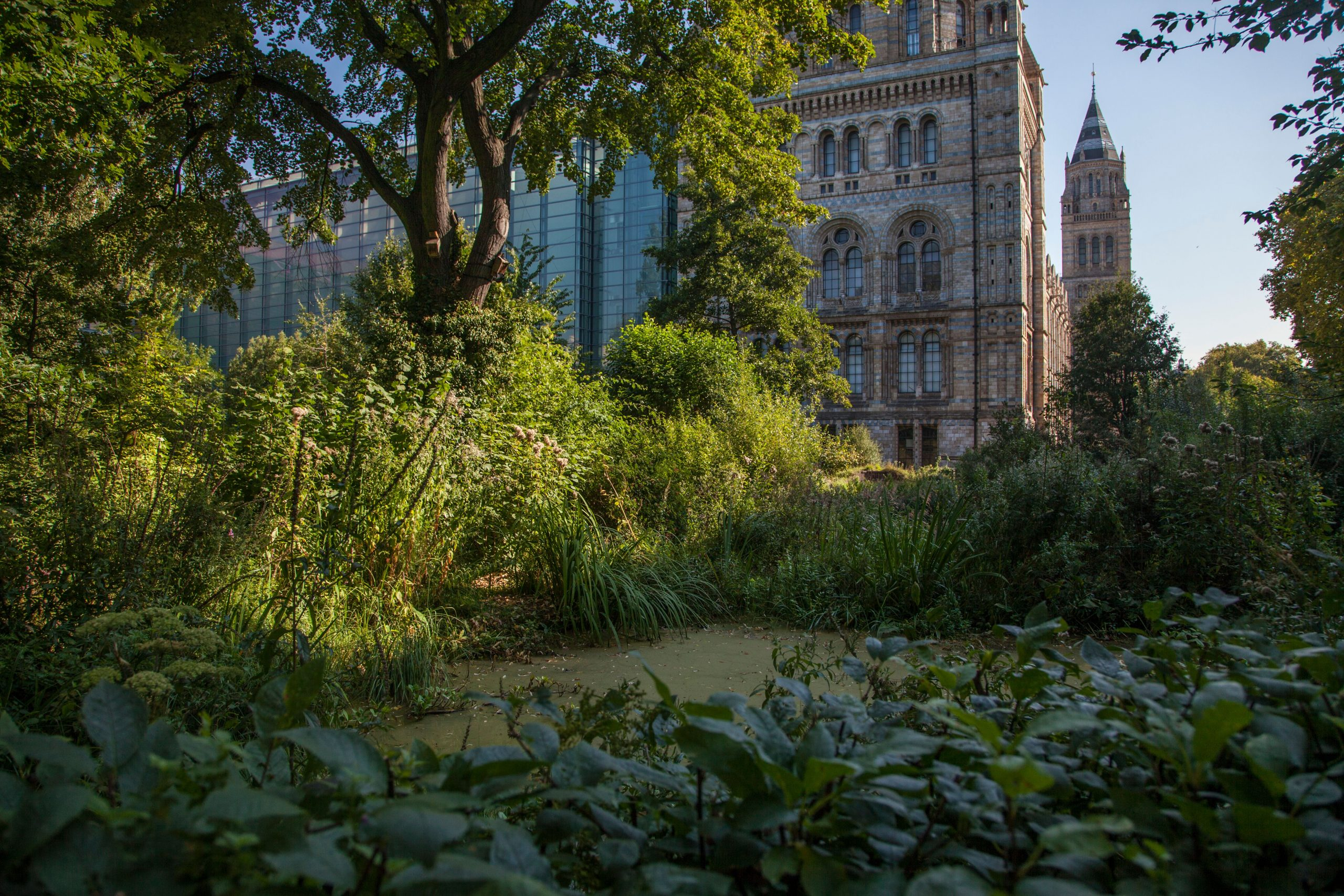 The wildlife garden at the Natural History Museum. The institution has stepped up its environmental commitments