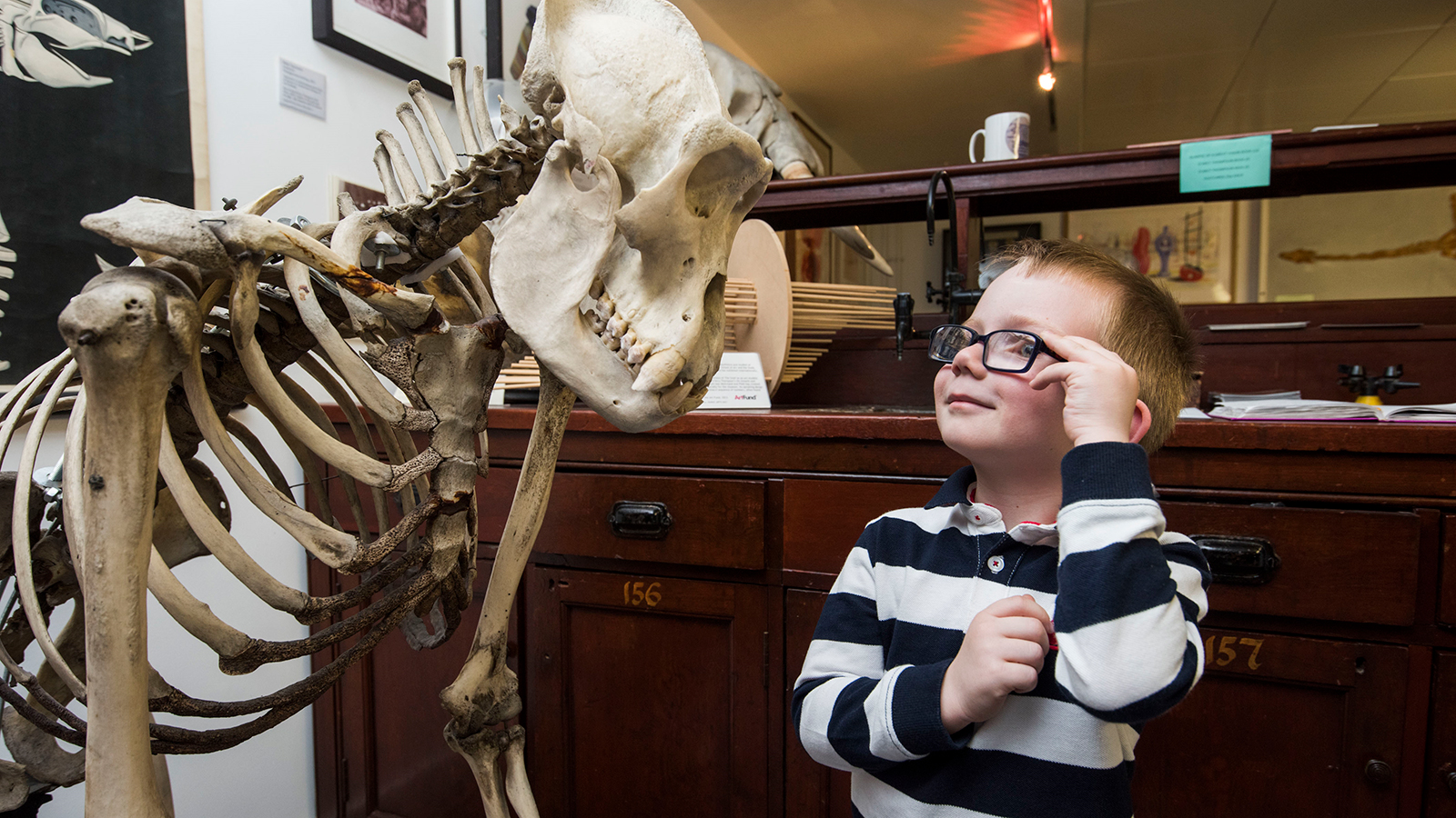 A young visitor to the D'Arcy Thompson Zoology Museum, University of Dundee