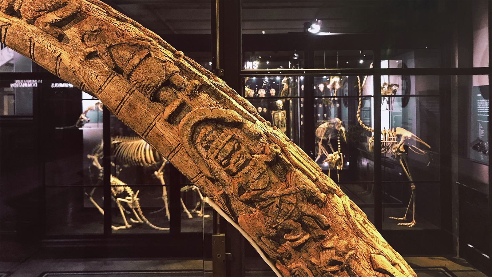 Benin tusk from Manchester Museum's Living Cultures collection