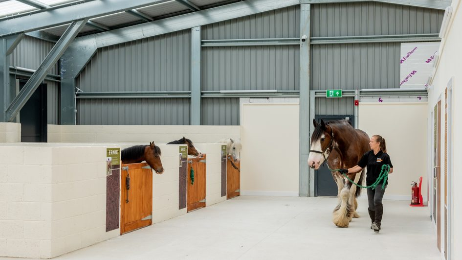 The new undercover stables will provide shelter for the museum's four animals